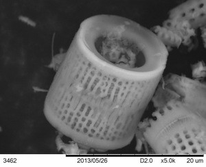 diatomaceous-earth-close-up
