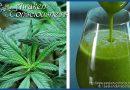 4 Surprising Health Benefits of Juicing Raw Marijuana