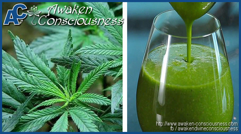 4 Surprising Health Benefits of Juicing Raw Marijuana