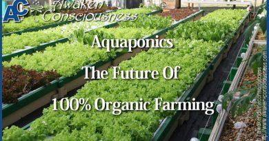 AQUAPONICS IS THE FUTURE OF 100% ORGANIC FARMING